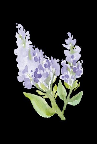 swiejko-flowers_43_11
