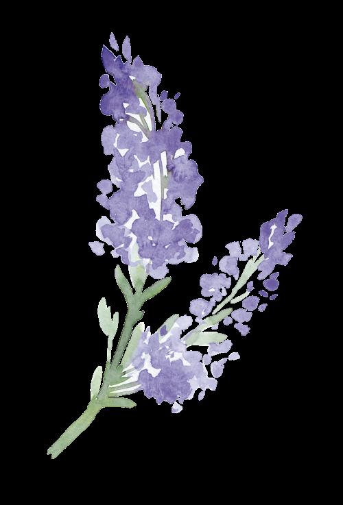 swiejko-flowers_43_19